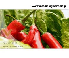 Praca na szklarni z papryką/pomidorami/ścinka ogórków Holandia !
